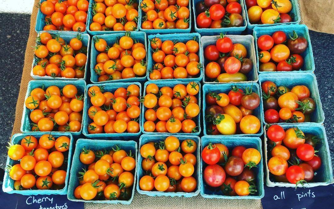 Tomato Tasting Contest this Sunday (Plus What's Fresh)